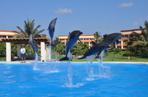 delfinario cancun